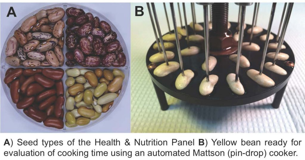 """Fast-cooking dry beans provide more protein, iron than 'slower' varieties"" news story highlights the research study ""Demonstrating a Nutritional Advantage to the Fast-Cooking Dry Bean (Phaseolus vulgaris L.)"" by Jason Wiesinger, Karen Cichy et al. published in the Journal of Agricultural and Food Chemistry in November 2016."