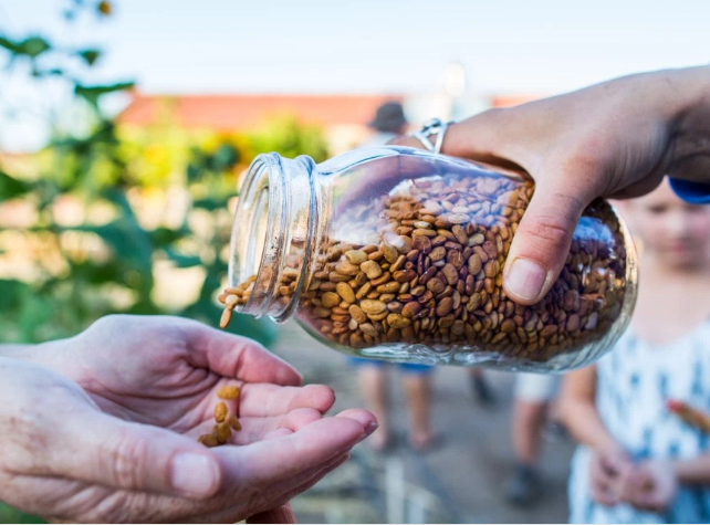 The Magical Fruit: Are heat- and drought-resistant tepary beans the future of food?