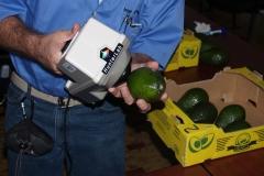 Measuring color in Hass avocado.